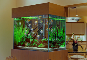 Aquarium Design Group design