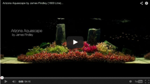 Aquascaping master James Findley Arizona