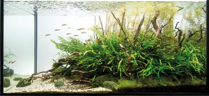 Project Ryuboku aquascaping